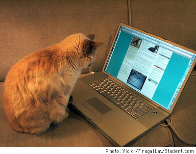 MacBookProCat.jpg